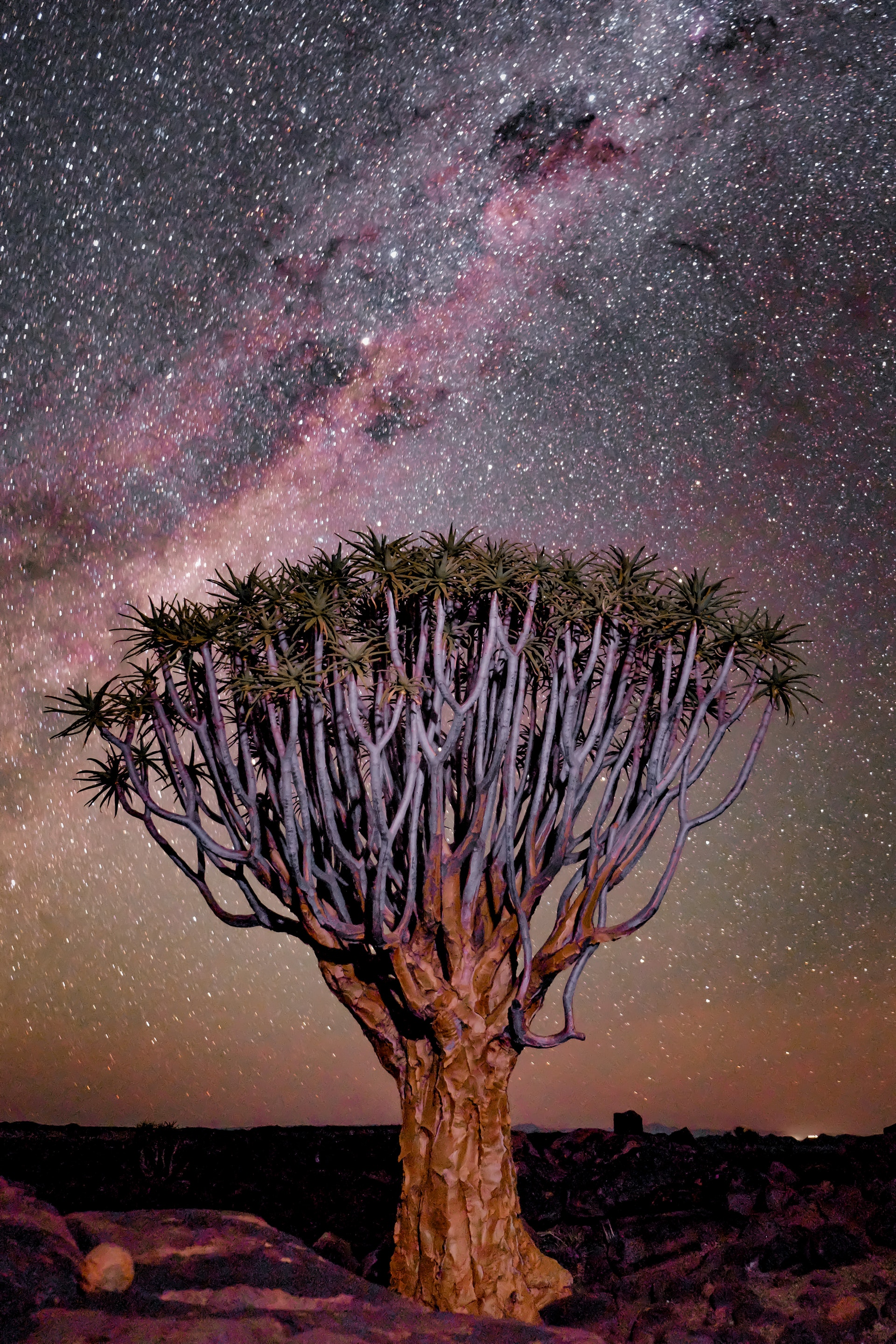 The Boabab Tree: A Look at Symbolism